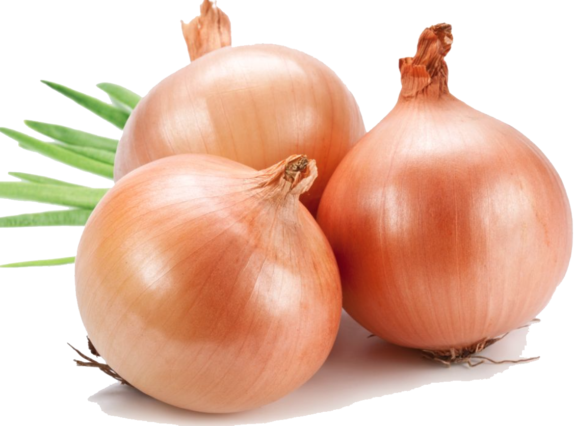 Onion clipart file. Yellow clip art png