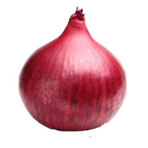 Png images transparent free. Onion clipart file