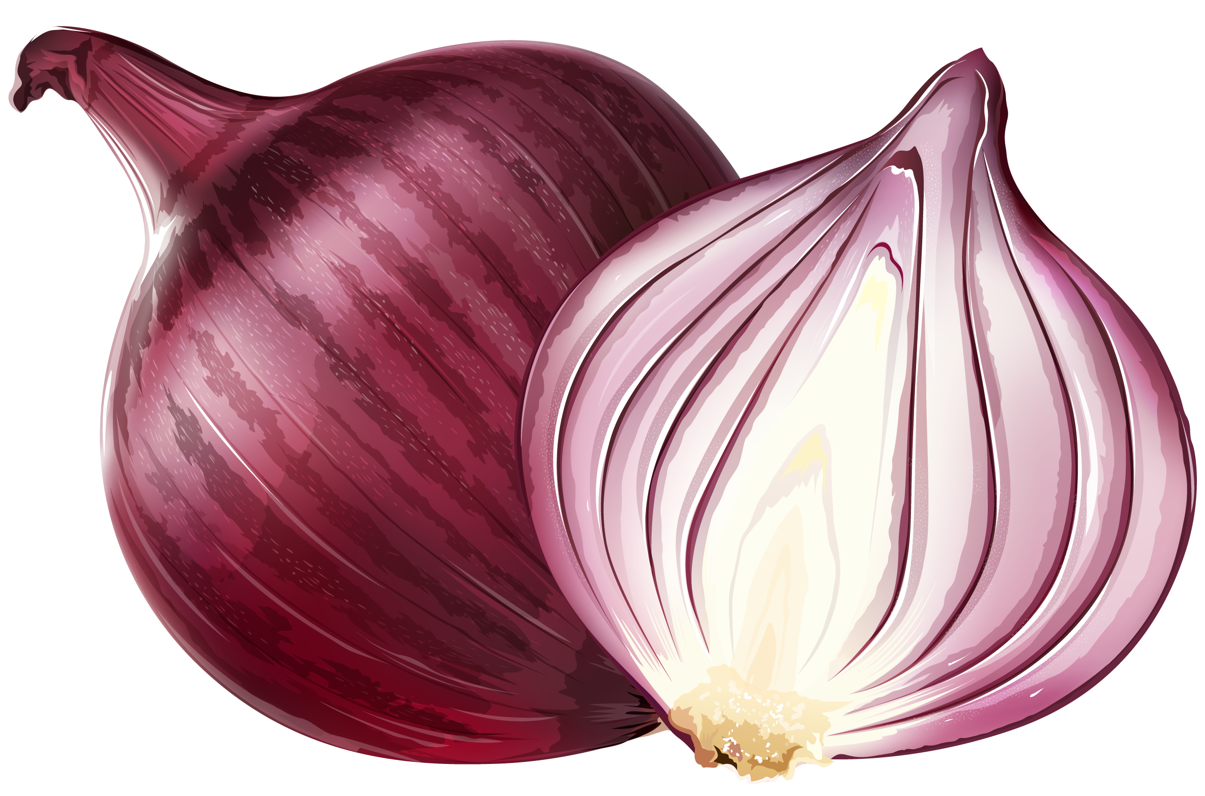 Red Onion Clipart