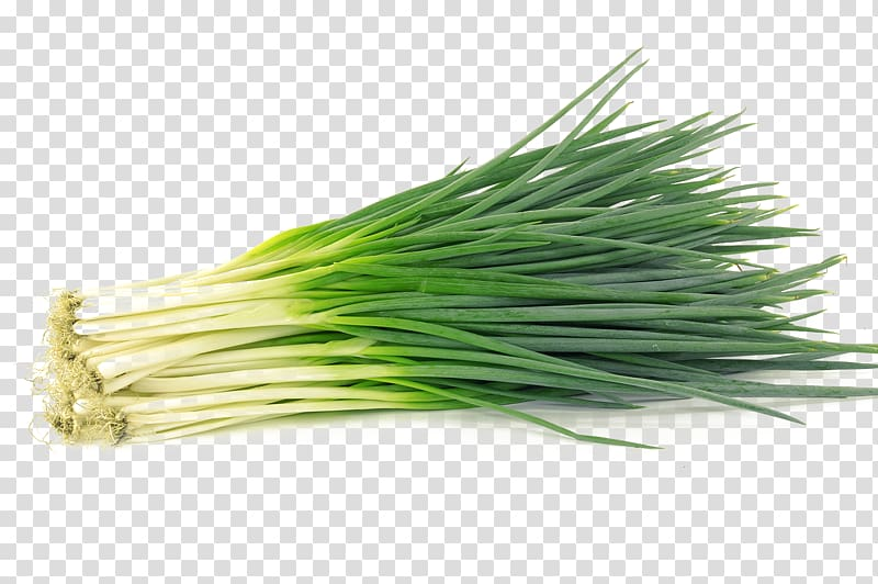 Allium fistulosum garlic chives. Onion clipart onion leaves