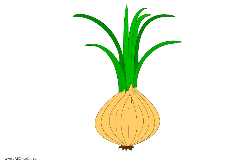 Raster picture . Onion clipart onion leaves