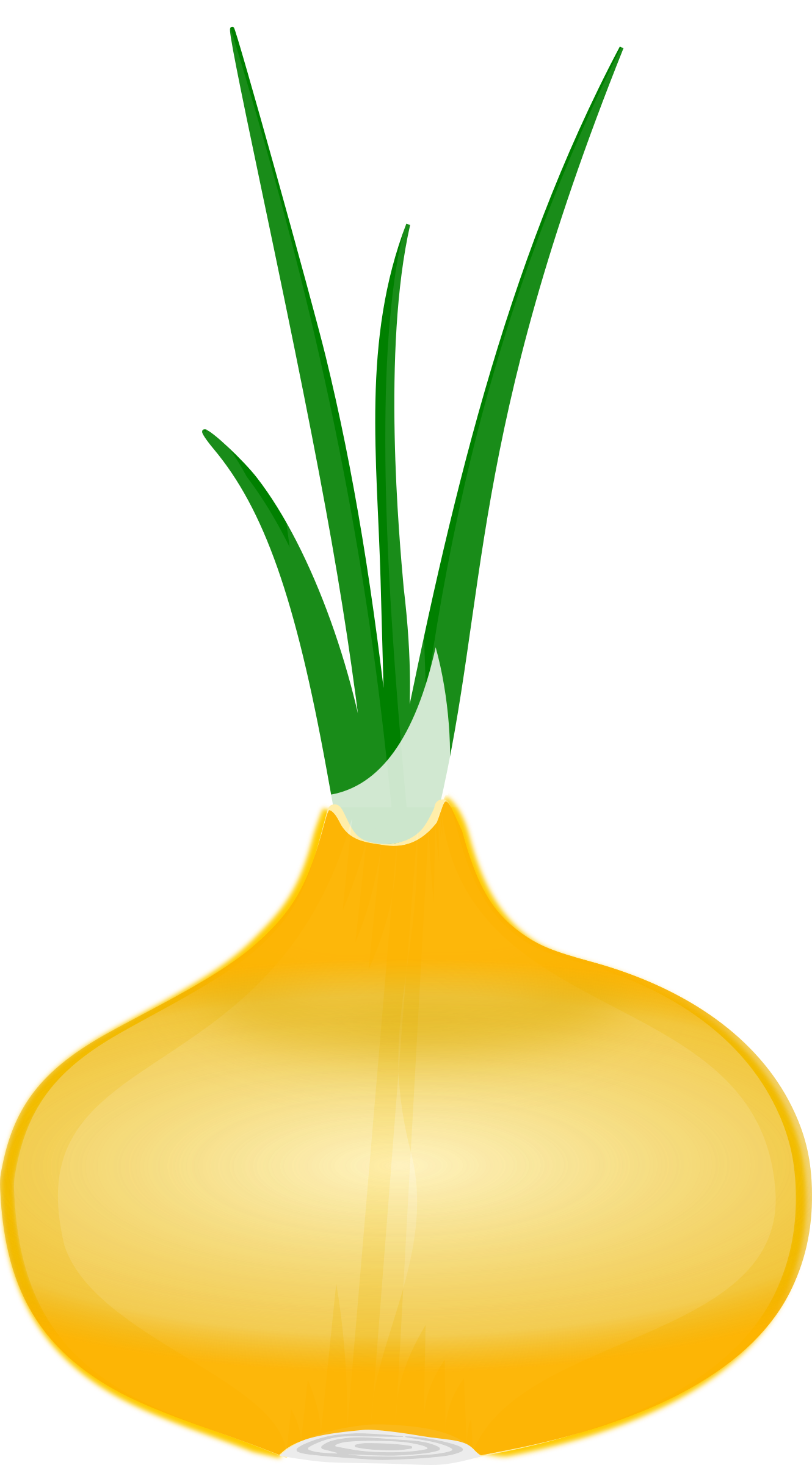Onion clipart onion leaves. Big image png