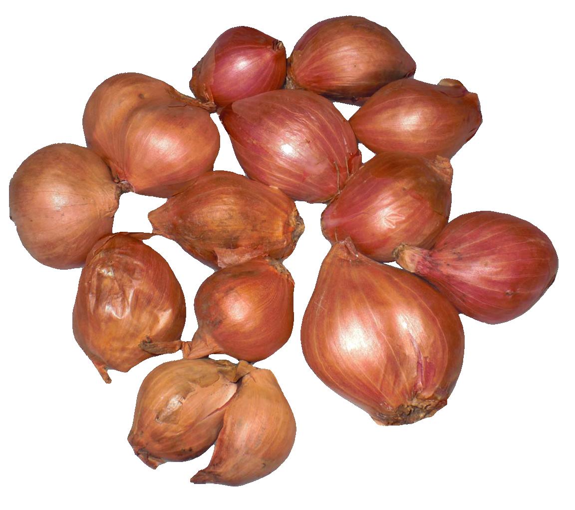 Onion clipart onion peel. Png images pngpix shallots
