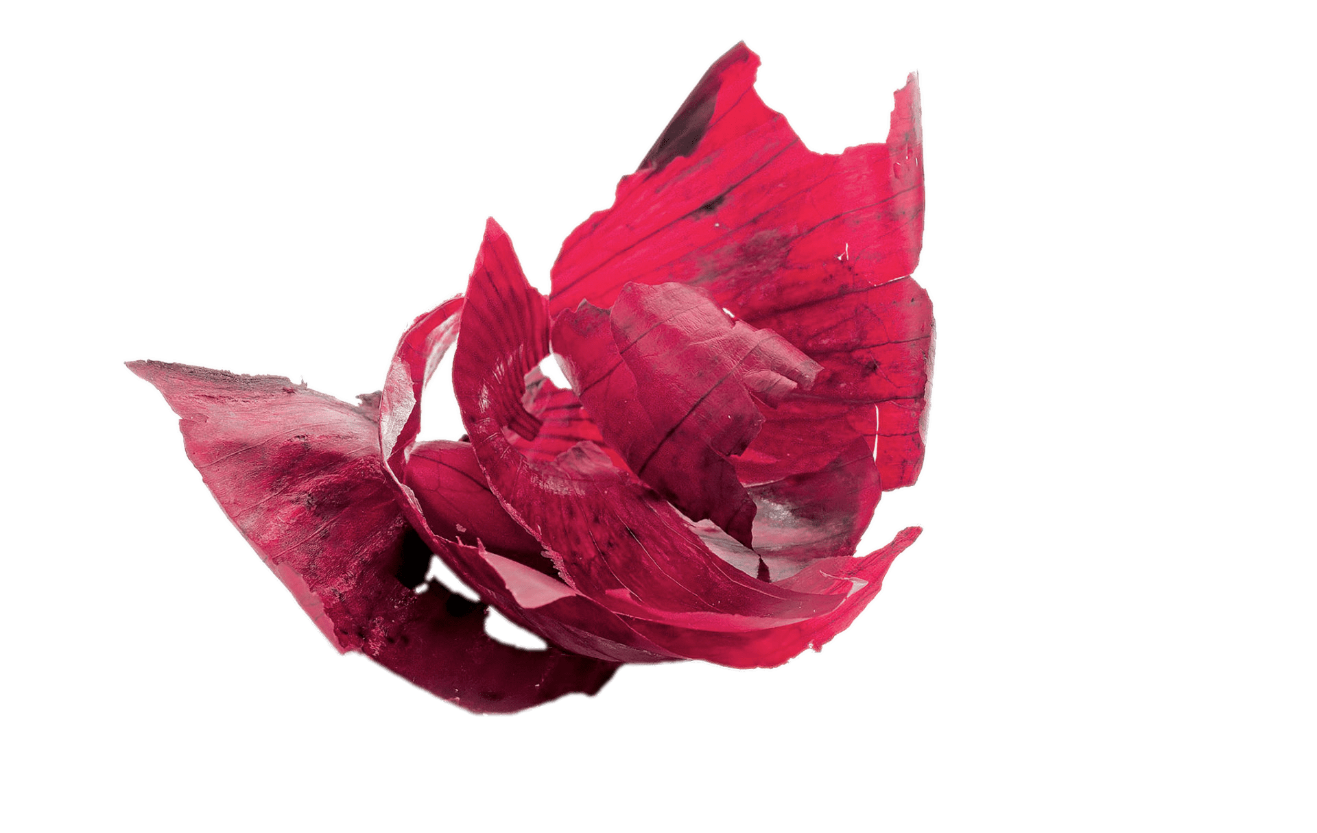Red peels transparent png. Onion clipart onion peel