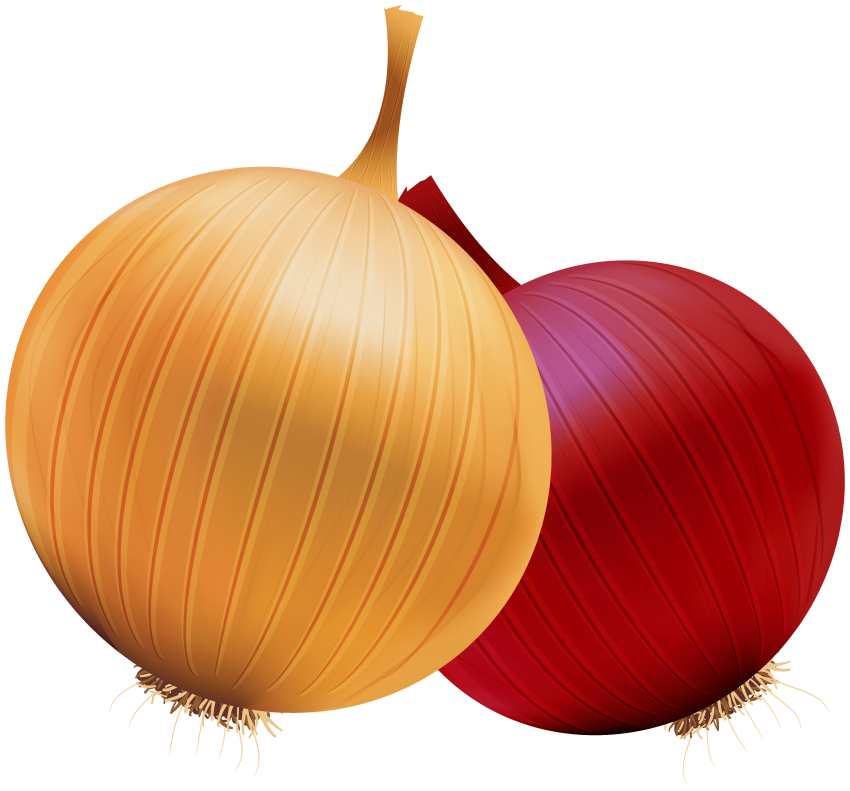 And red png free. Onion clipart onion slice