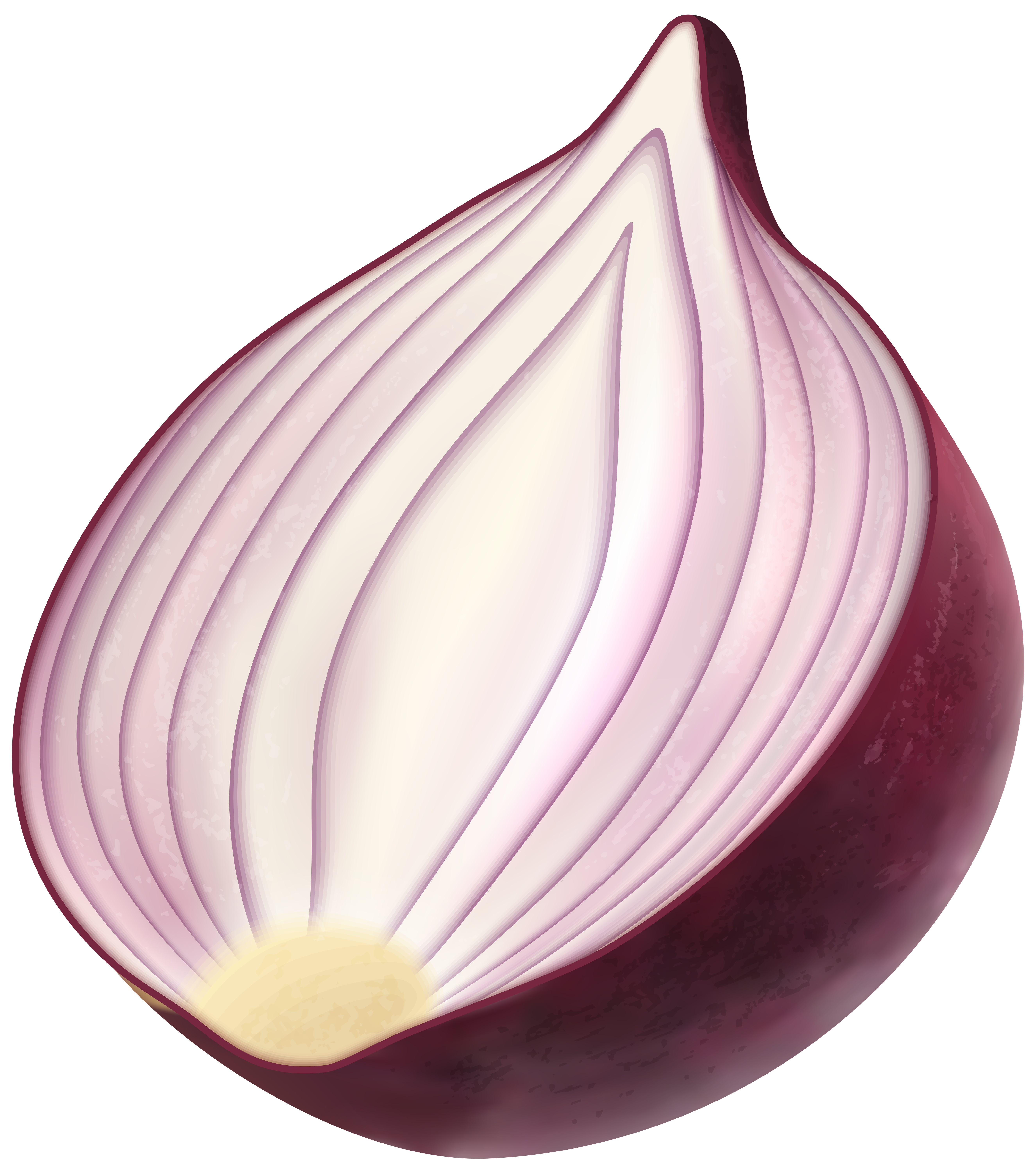 Png clip art image. Onion clipart red onion