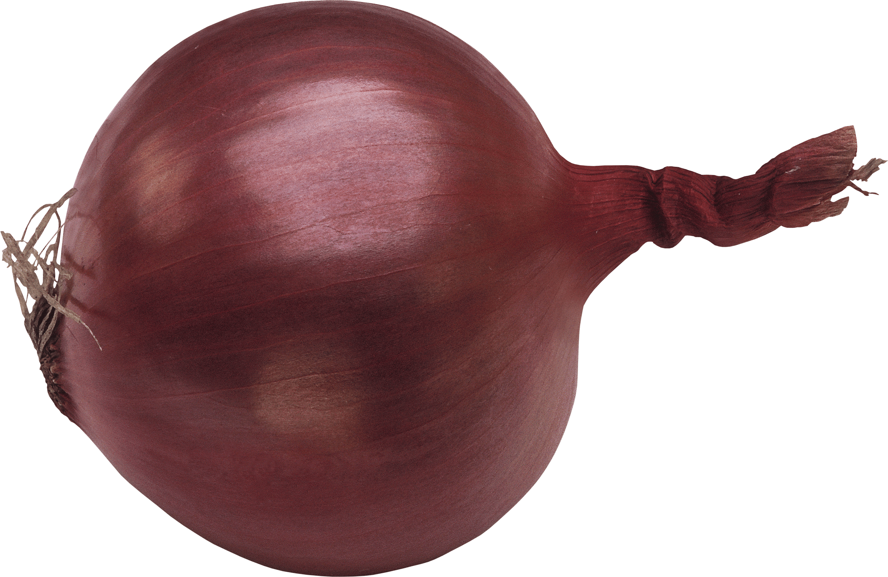 Onion clipart red onion. Transparent png stickpng food