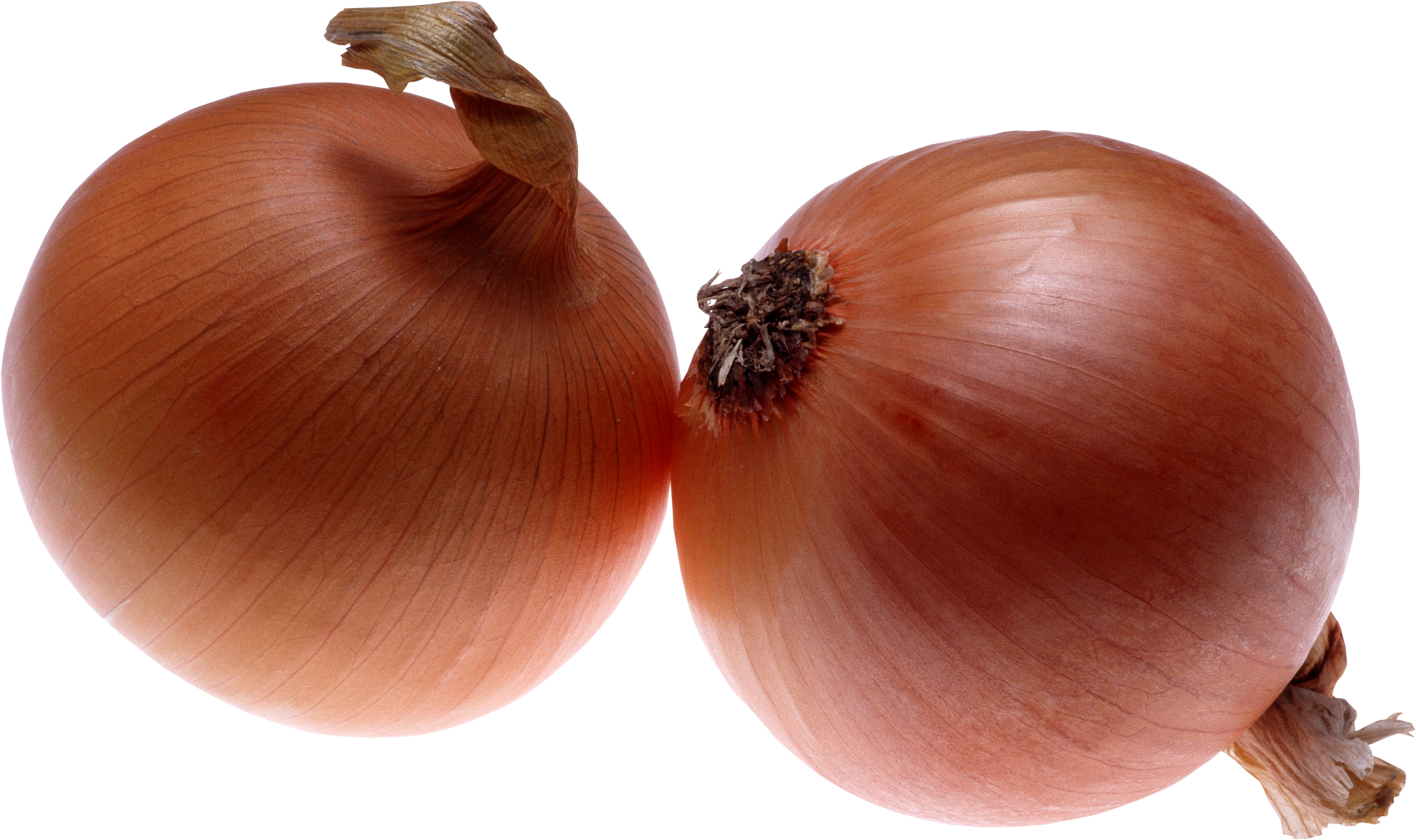 Onion clipart red onion. Png images free download