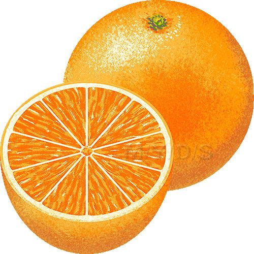 Orange clipart. Clip art free panda