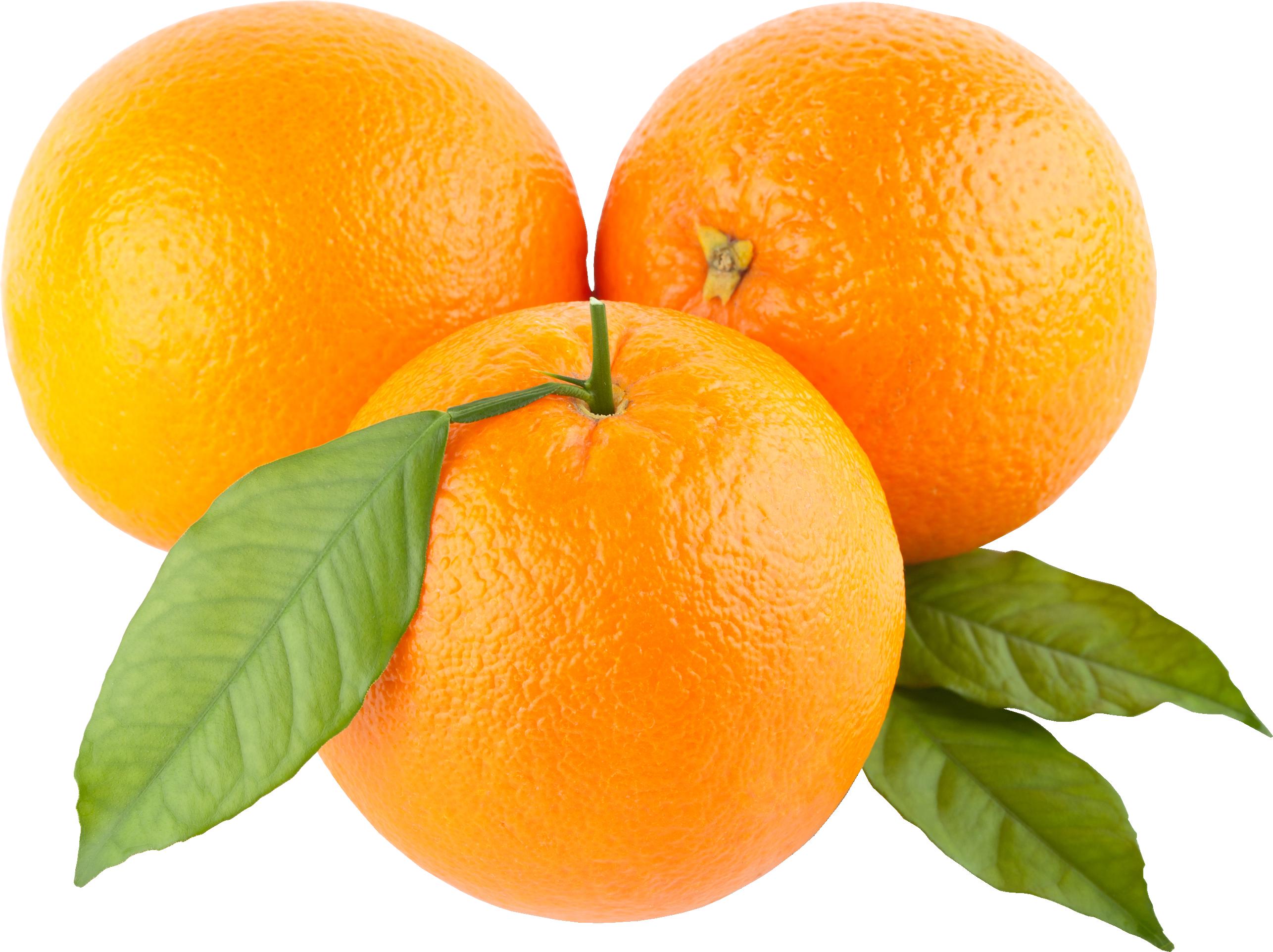 Png images free. Oranges image purepng transparent