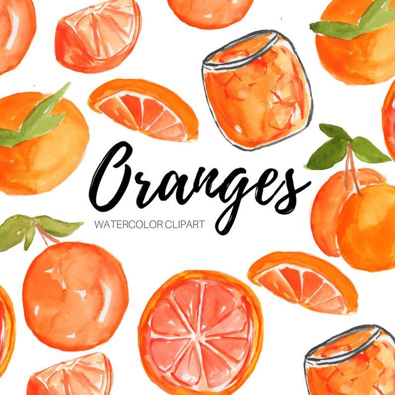 Watercolor orange fruit citrus. Oranges clipart comb