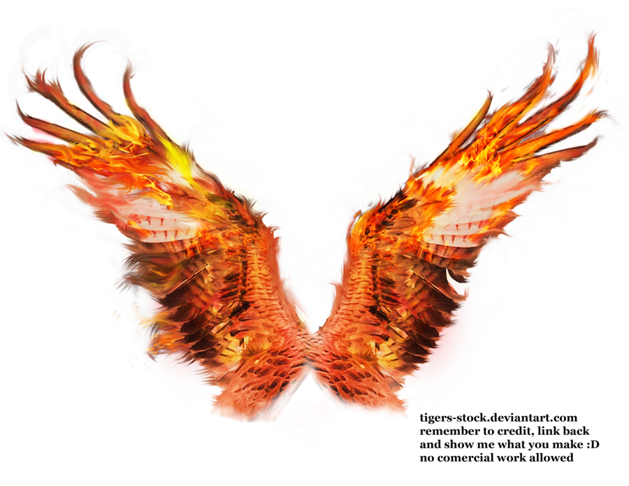 Phoenix clipart outlines. Wings drawing at getdrawings