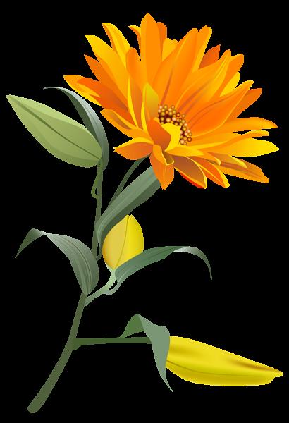 Orange flower png. Clip art image clipart