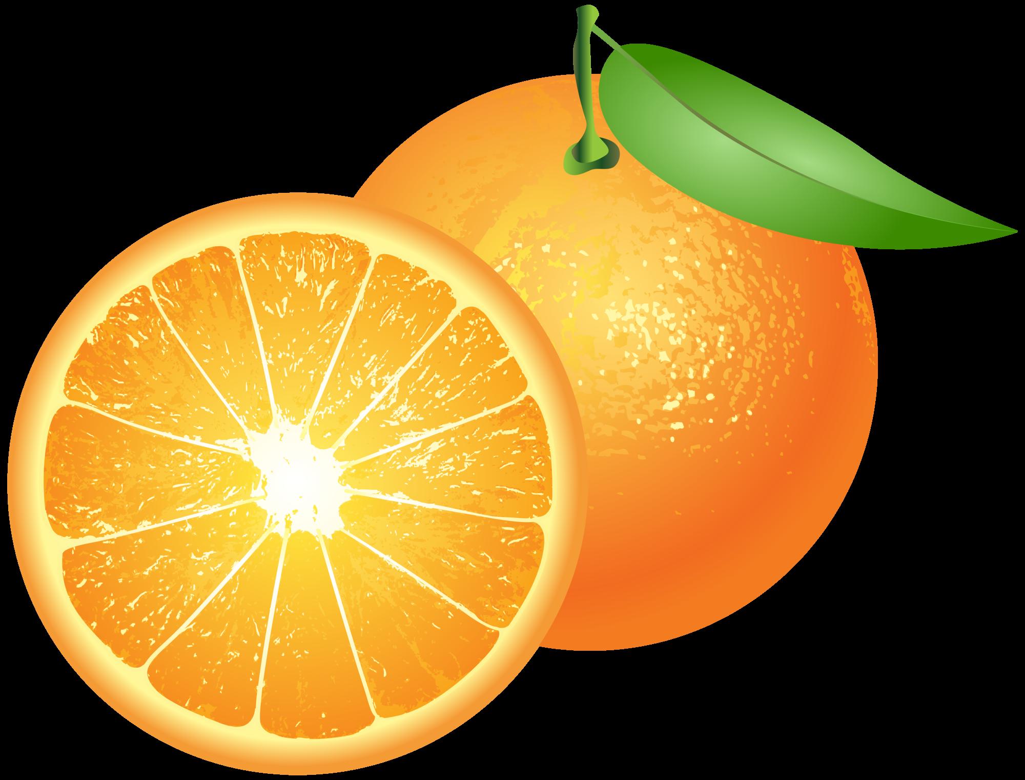 Png clip art . Oranges clipart