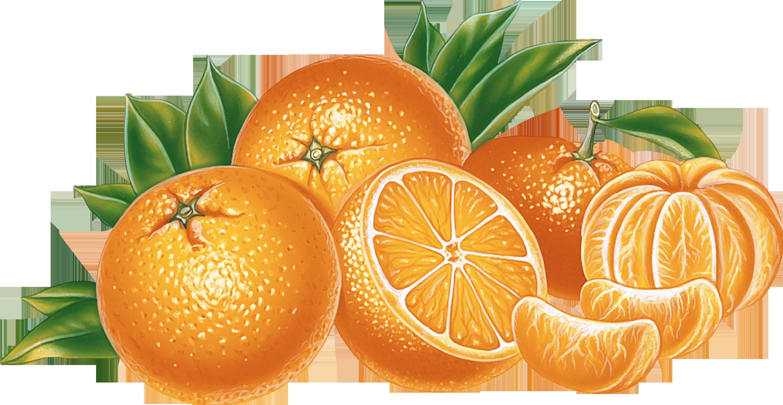 Png images free. Orange and mandarin image