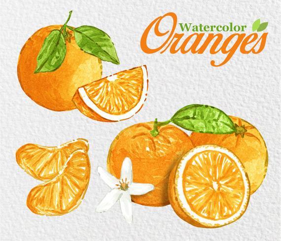 Oranges clipart comb. Watercolor tangerine fruits lemons