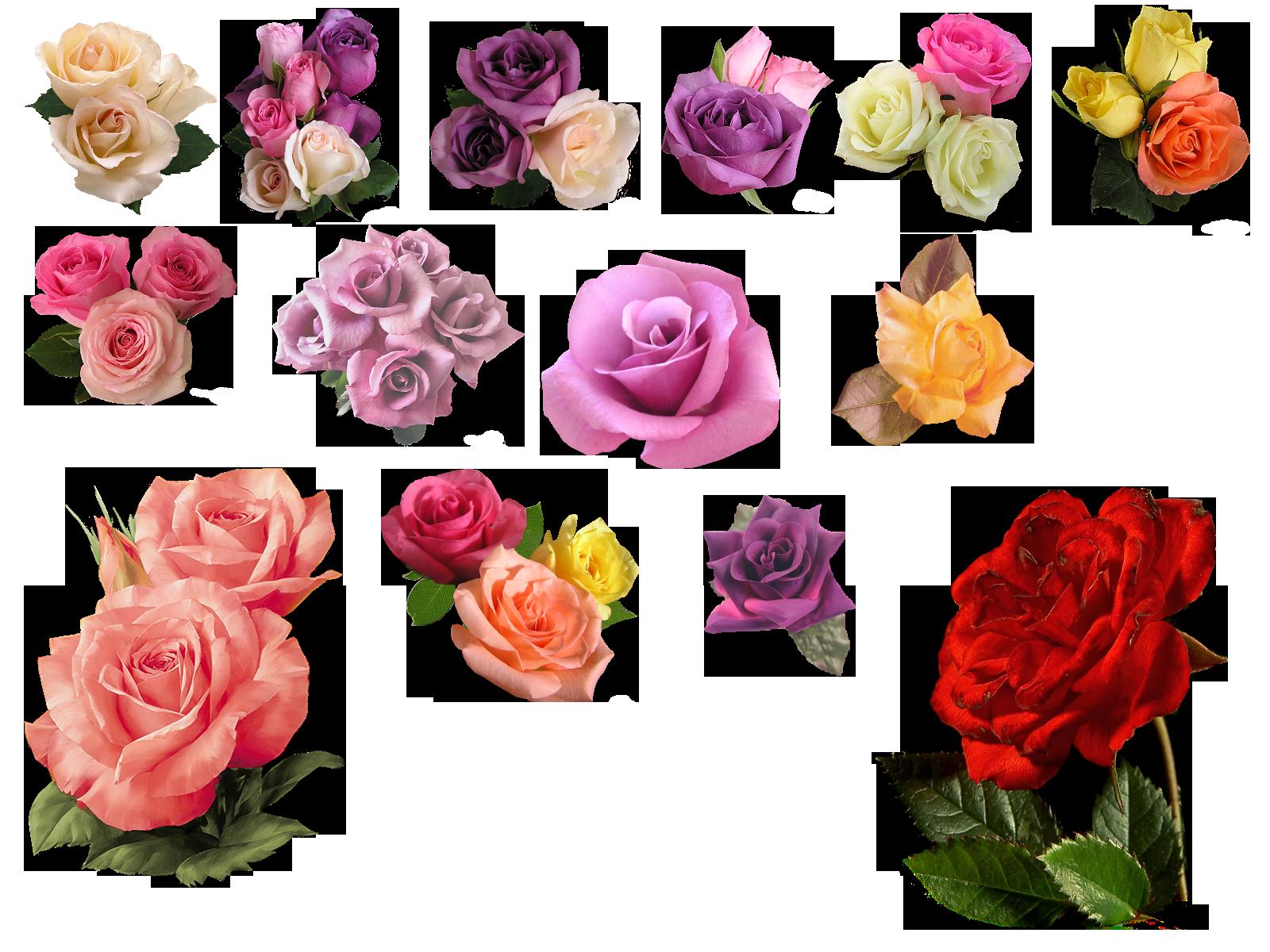 Png rose by hasiyne. Poppy clipart stemmed flower