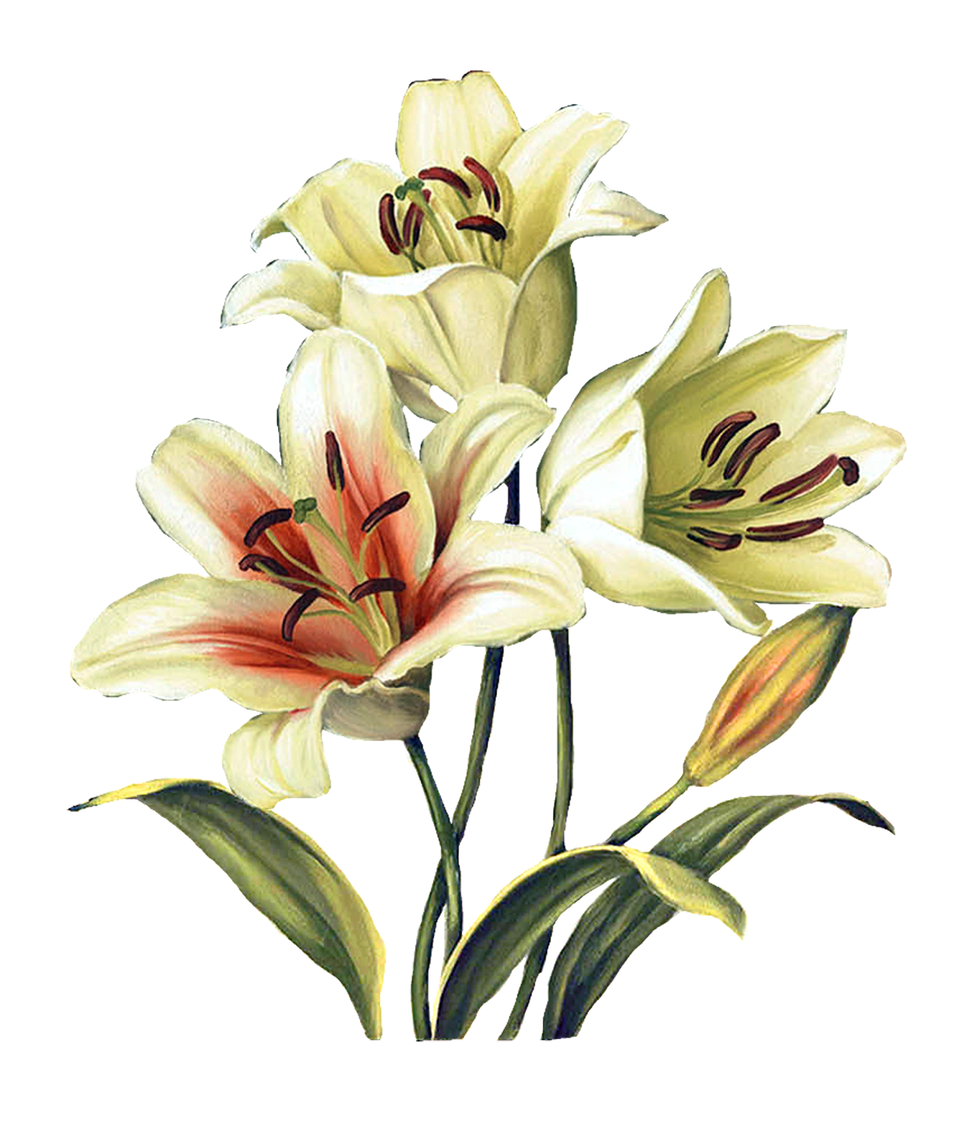 Decoupage flower painting png. Oranges clipart lilies