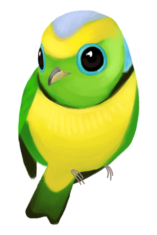 Oranges clipart parrot. Chlorophonia tumblr goldenbrowed callophrys