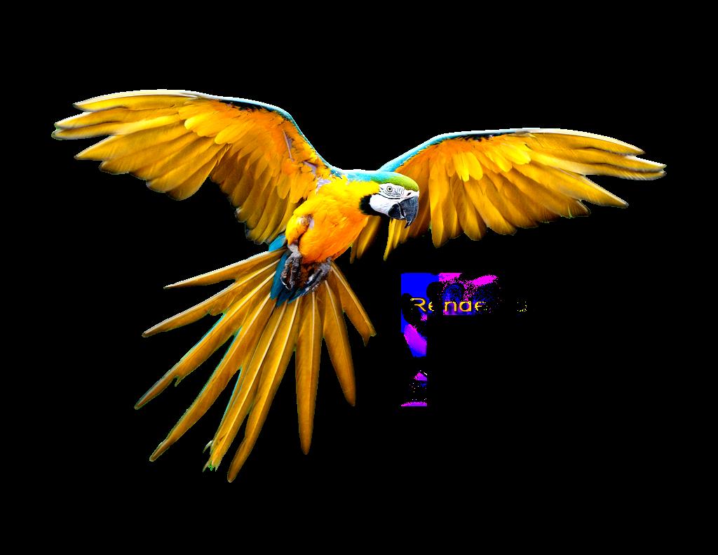 Oranges clipart parrot. Forgetmenot parrots