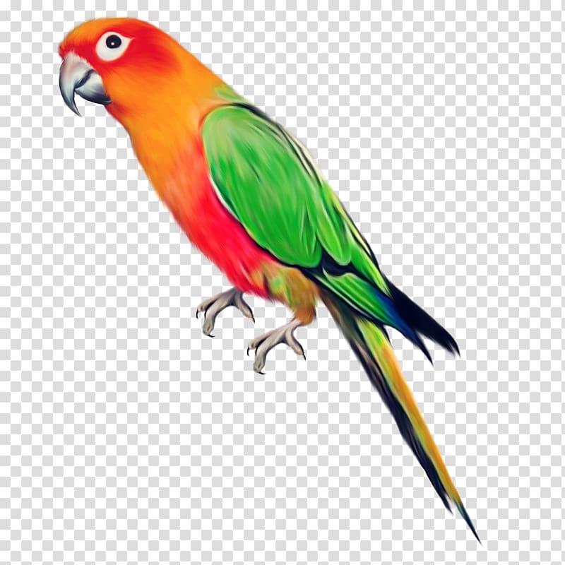 Orange bird png images. Oranges clipart parrot