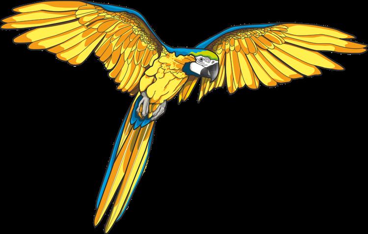 Oranges clipart parrot. Forgetmenot birds parrots