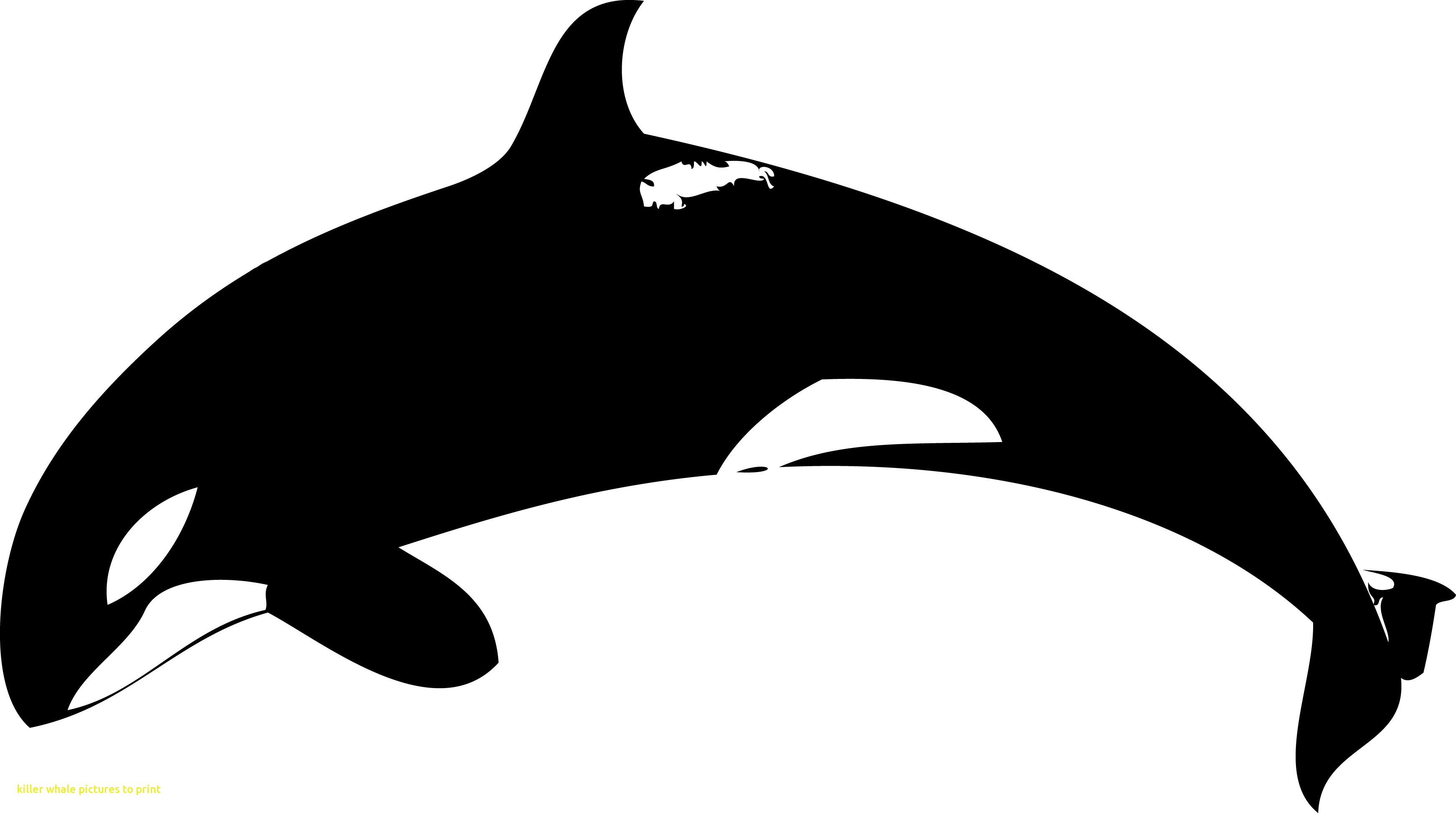 Emerging pictures to print. Orca clipart