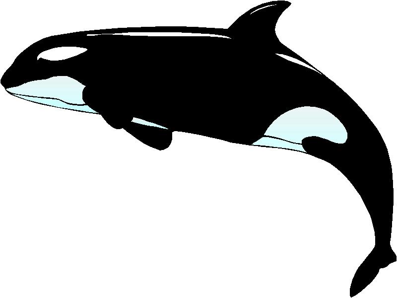 Orca clipart. Frame