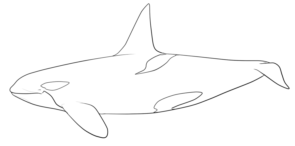 Orca clipart coloring page. Whale pages costumepartyrun vitltcom