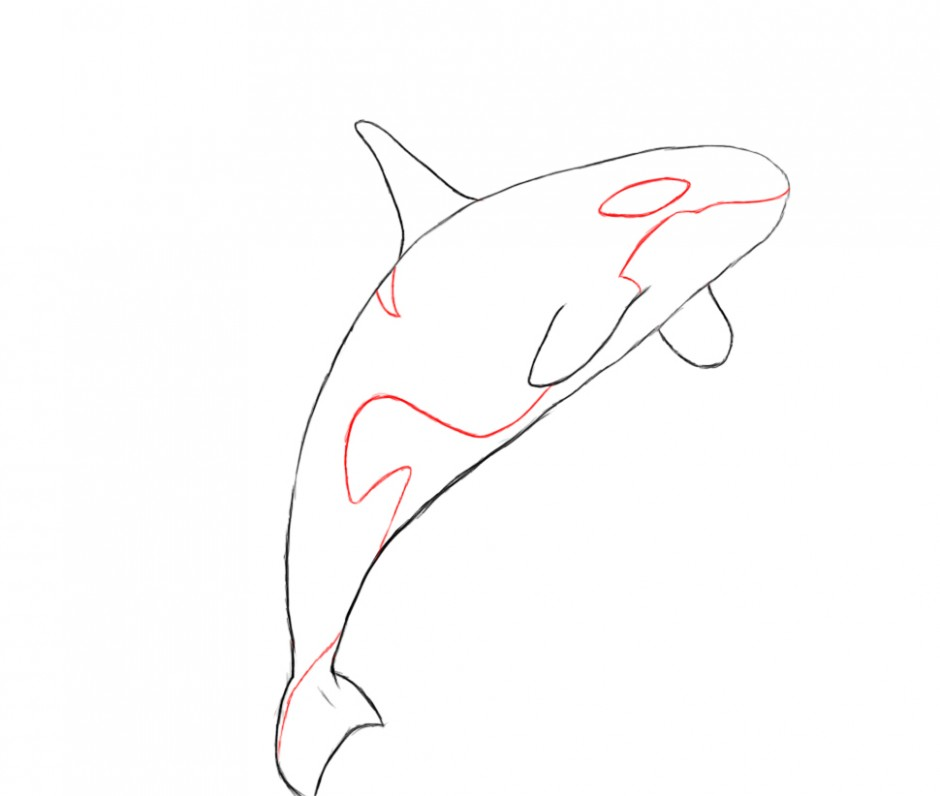 Drawings library whale . Orca clipart coloring page