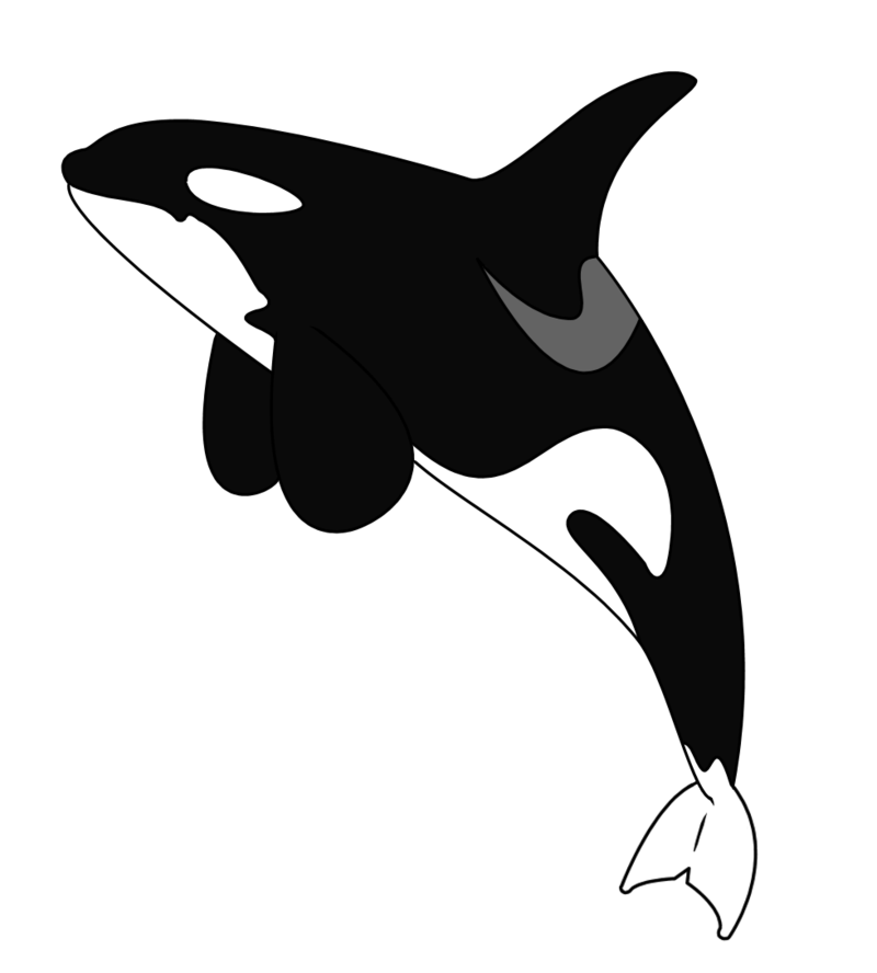 Whale cartoon dolphin fish. Orca clipart drawing