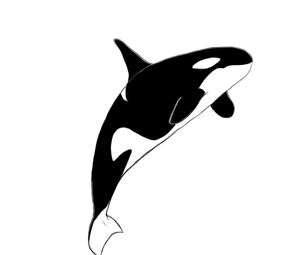 Orca clipart easy draw. Drawing free download best