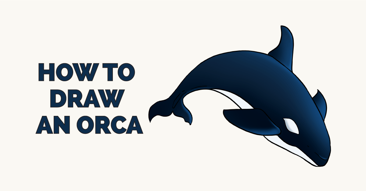 How to an really. Orca clipart easy draw