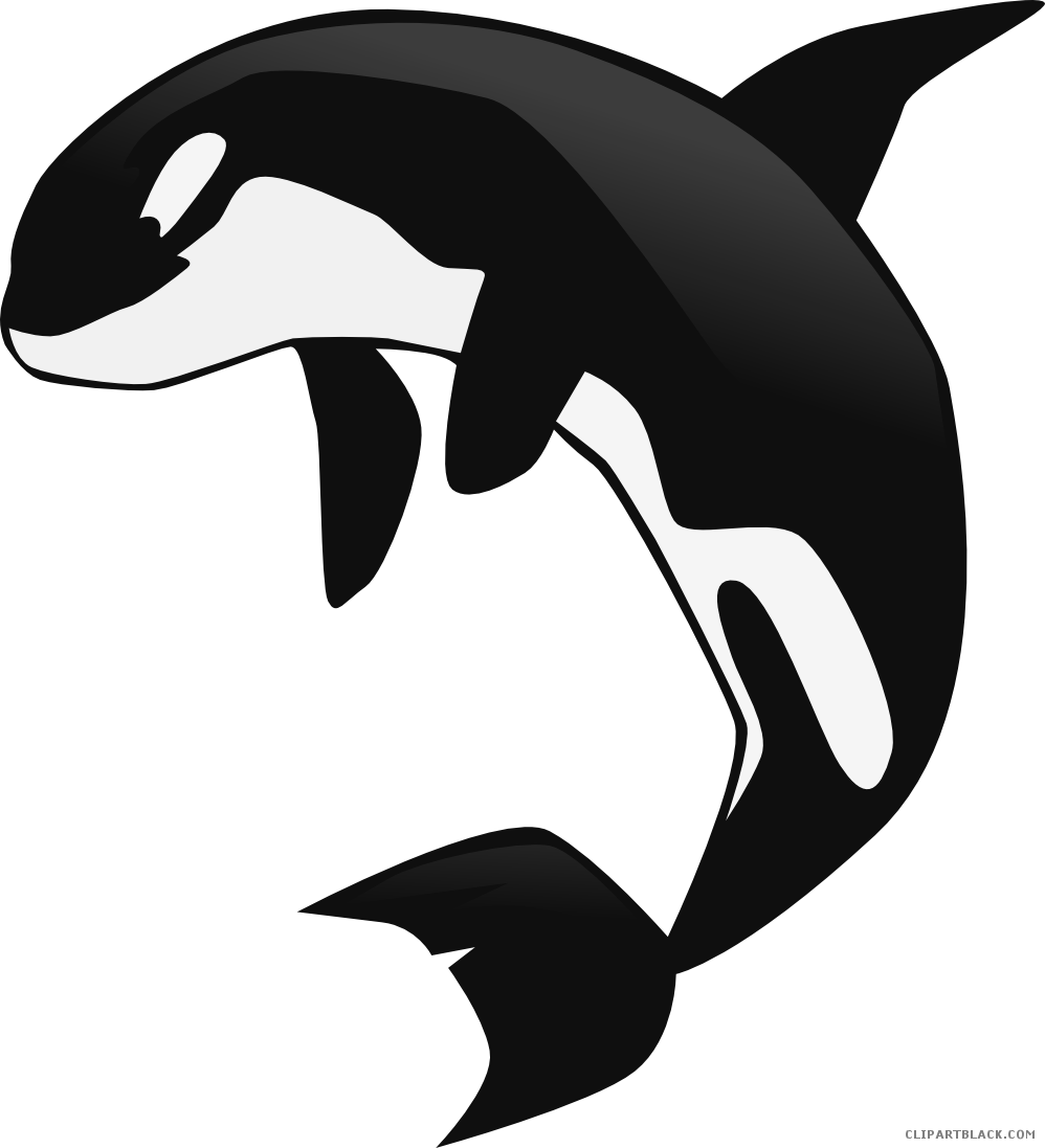 Orca clipart outline. Whale page of clipartblack