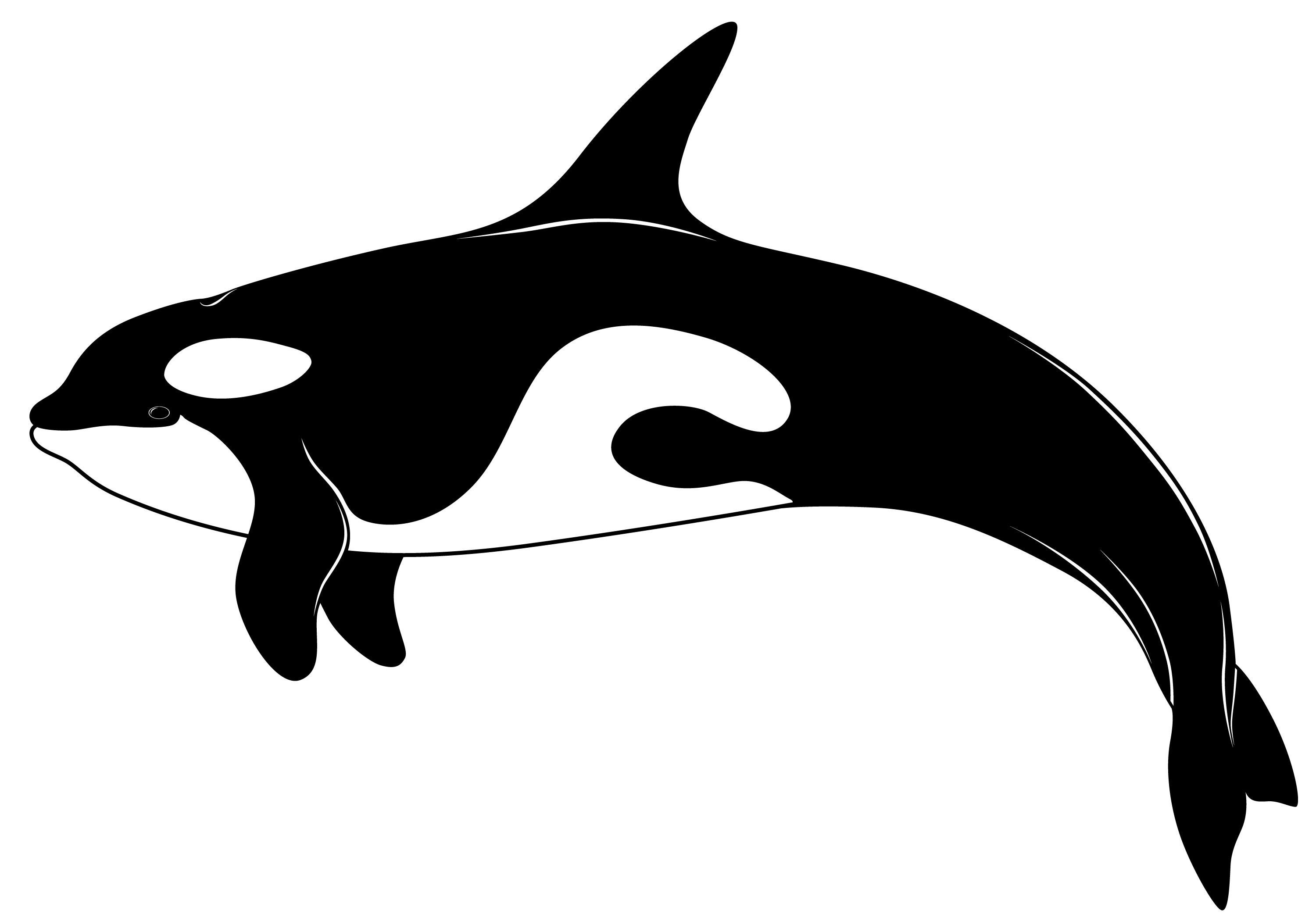 Orca clipart outline. Images gallery for free