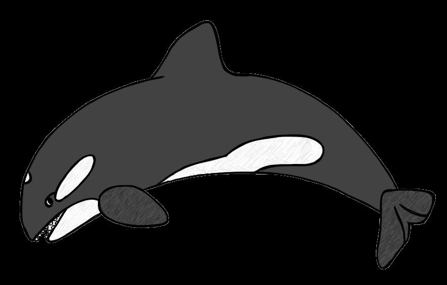 orca clipart outline