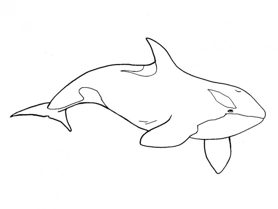 Free black and white. Orca clipart outline