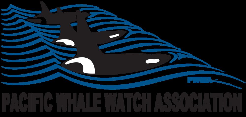 Orca clipart realistic. Faq pacific whale watch