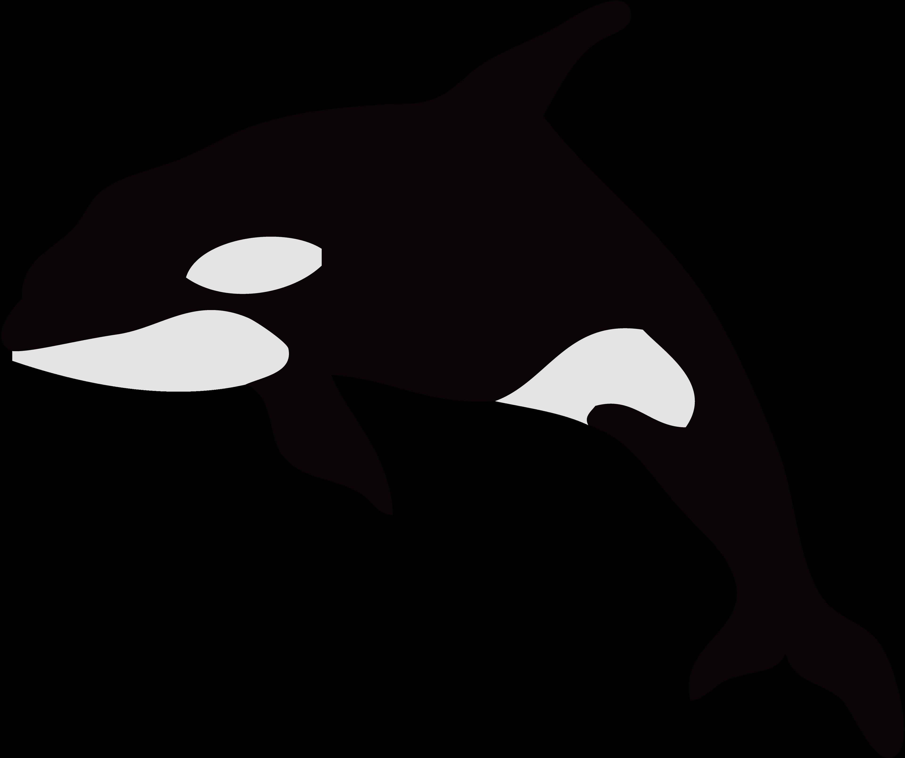 Orca clipart silhouette. Dolphin killer whale illustration