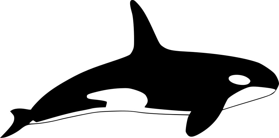 orca clipart vector