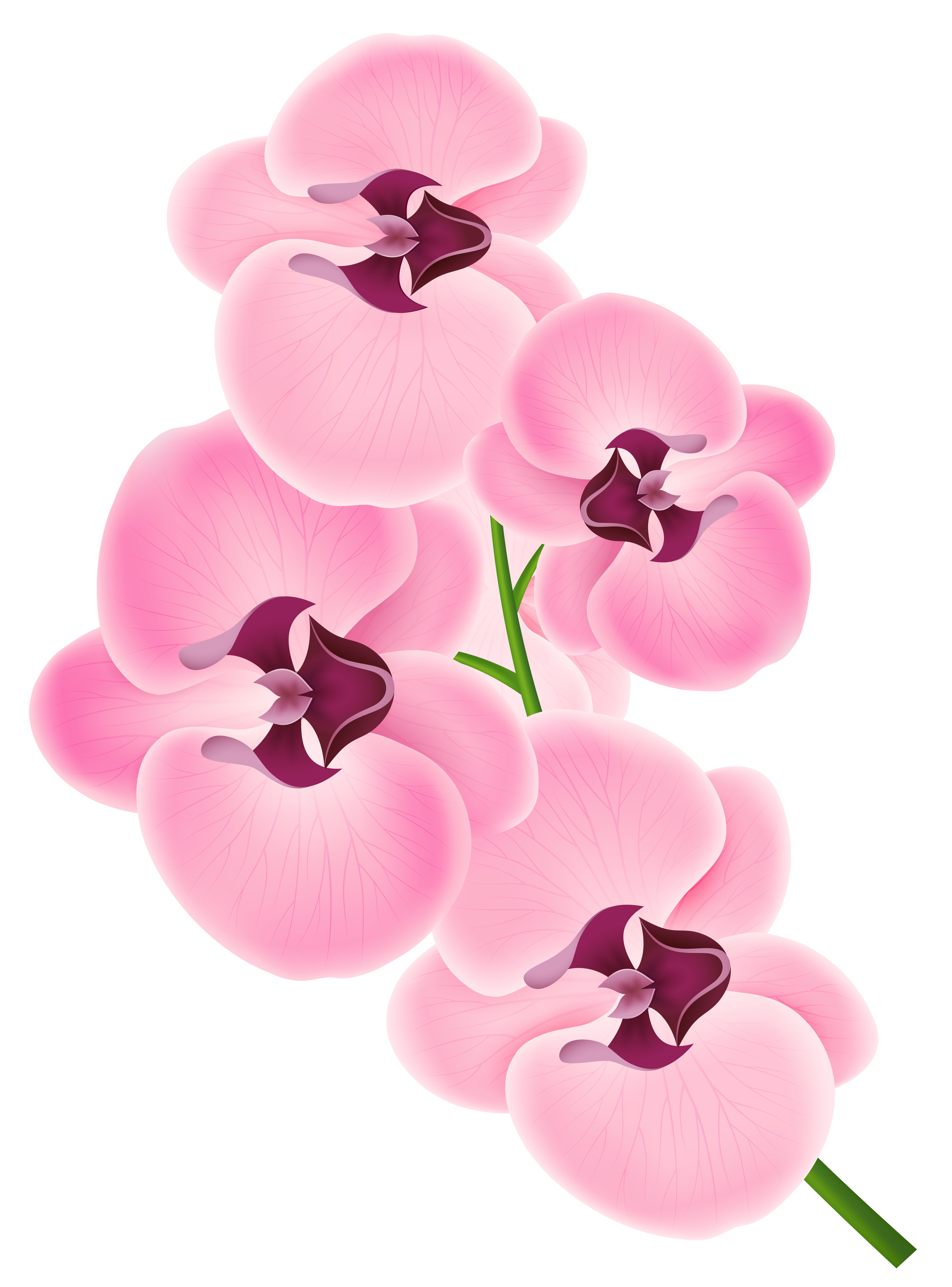 Free orchid cliparts download. Clipart hammer pink