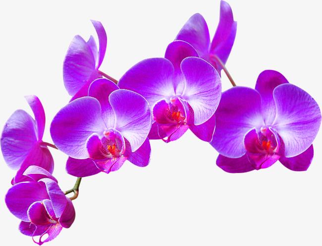 Orchid clipart. Purple decoration pattern flowers