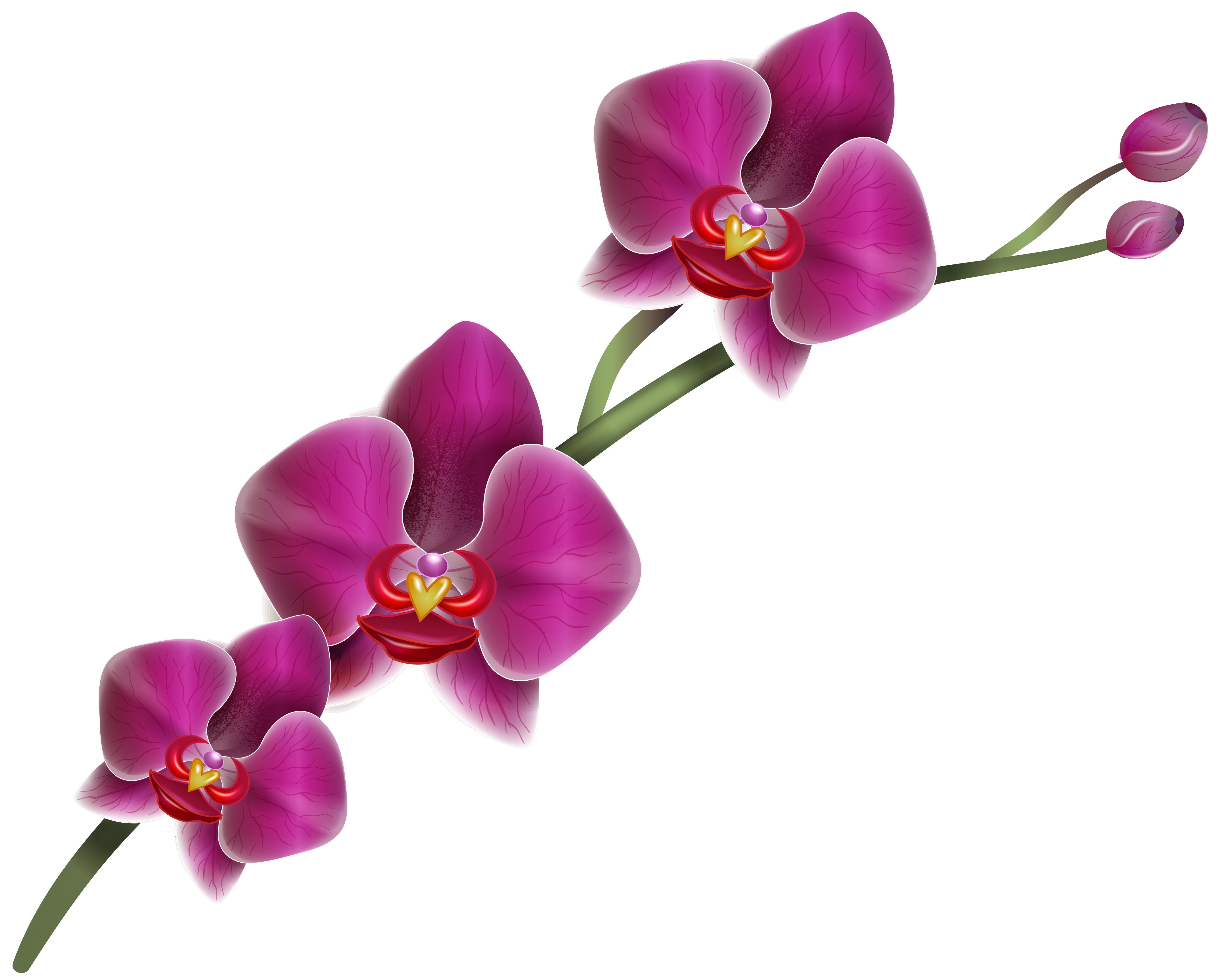 Orchid clipart. Purple png image gallery