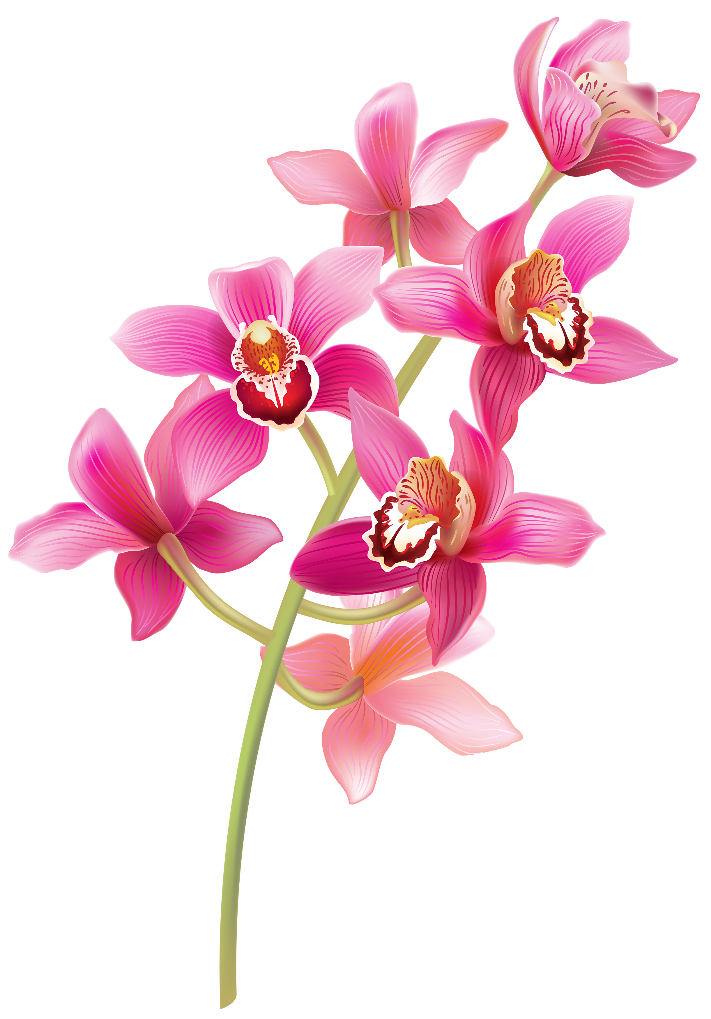 Stem pink orchids png. Orchid clipart