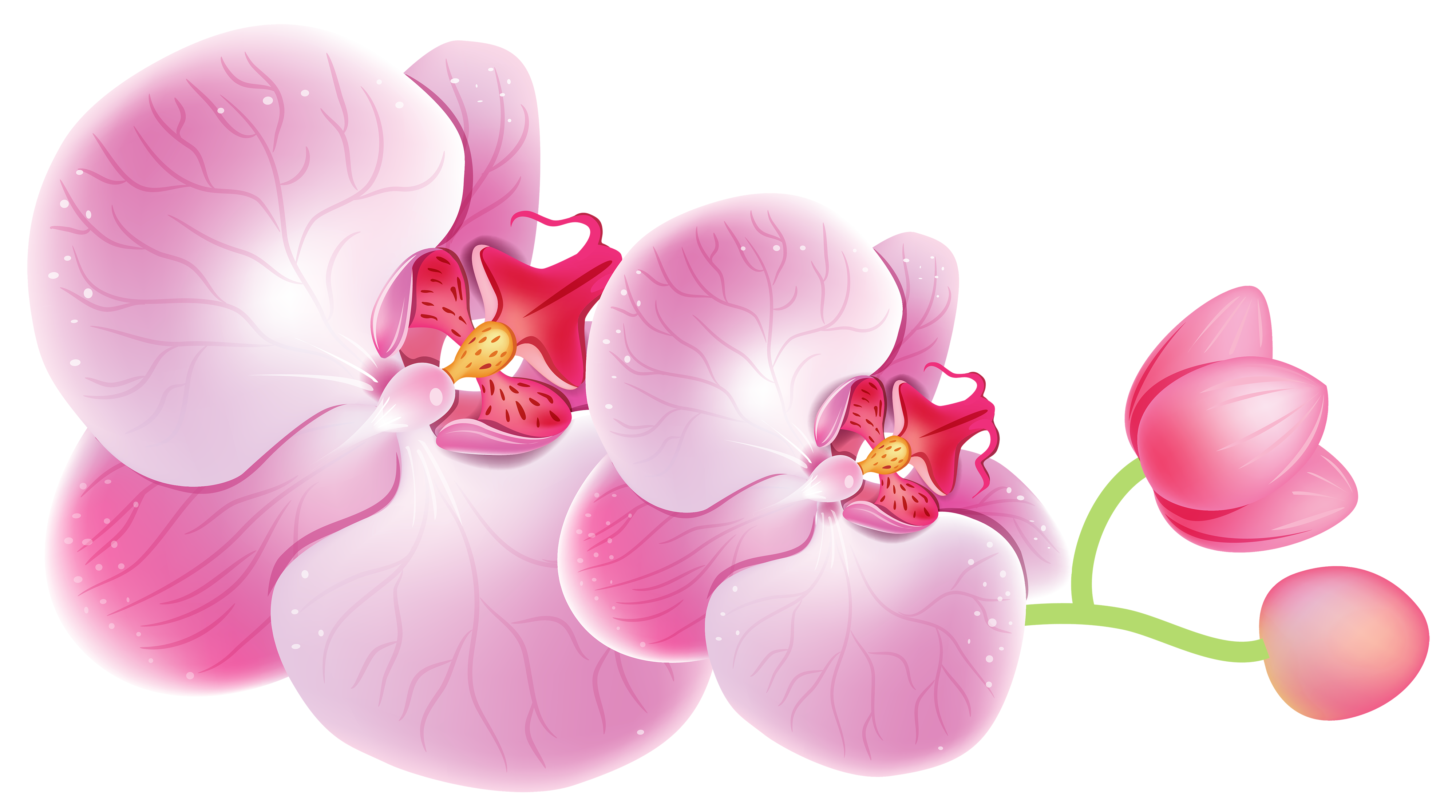 Orchids png best web. Orchid clipart