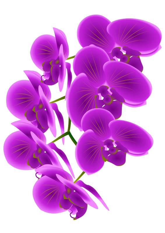 Orchid clipart. Free cliparts download clip