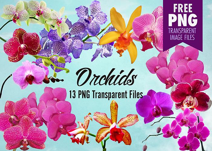Flower clip art transparent. Orchid clipart fuschia