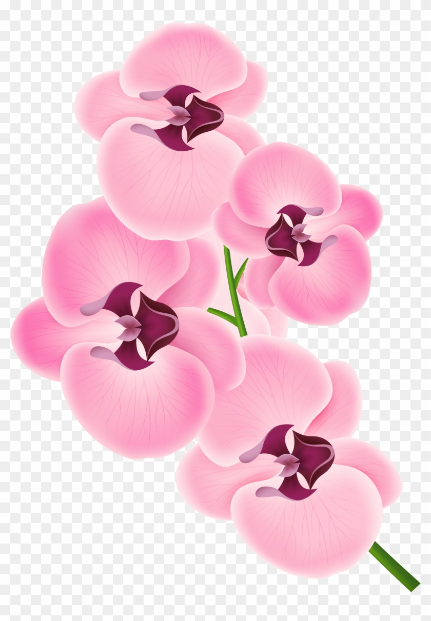 Orchid clipart fuschia. Tropical png free