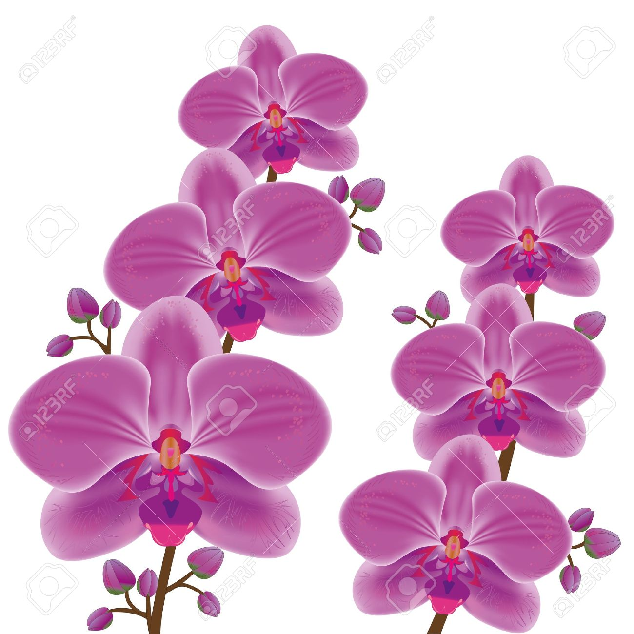 Look at clip art. Orchid clipart fuschia