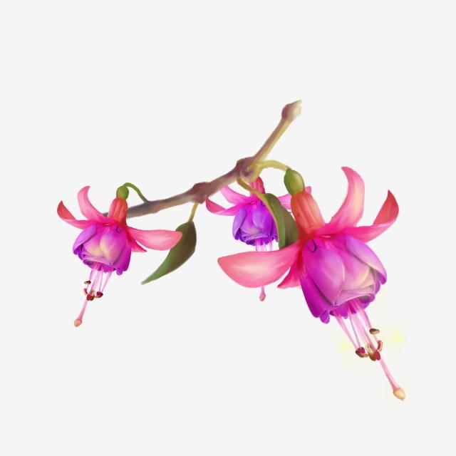Orchid clipart fuschia. Fuchsia flower png vector